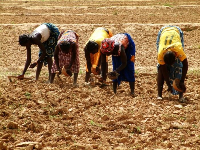 L'Agriculture en Afrique. Crédit : Jennifer Lazuta /IRIN