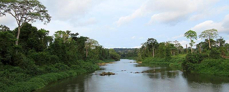 Cameroun:Une centaine de défenseurs de l'environnement attendus à Yaoundé