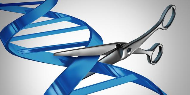 Des ciseaux génétiques pour le cerveau (CRISPR-Cas9)