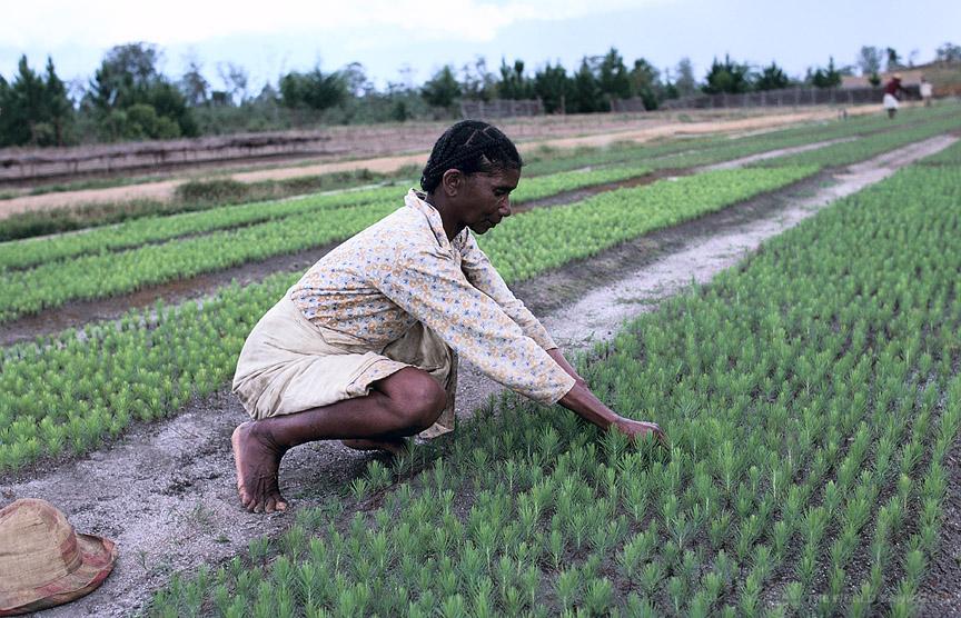 Une agricultrice à Madagascar. Crédit photo : Sources