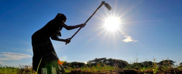 L'assistance technique du FIDA pour aider le développement du secteur des semences de Maurice qui conduira à la sécurité alimentaire