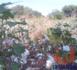 Tchad : des champs de coton présidentiel dévastés par des troupeaux de boeufs