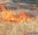 Tchad : un feu de brousse fait des dégâts dans le département de Ouadi-Rimé