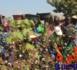 Coton Tchad : le personnel du Logone Occidental a lancé un préavis de grève