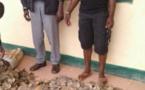 Cameroun /Ngaoundal : Plus de 100 kg d'écailles de pangolins saisis