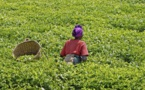 US $30 billion to benefit farmers, strengthening Africa's agriculture