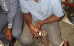 Cameroun/trafic d'ivoire : La lutte s'intensifie