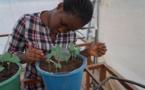 Bourses de recherche Ideas Matter pour les étudiants ouest-africains