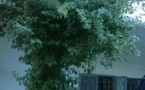 Tchad: Loue une villa de deux étages équipée à N'Djamena