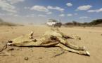 Somalie : le CICR vient en aide à 240 000 personnes victimes de la sécheresse