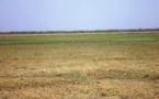 Tchad : Un ambitieux projet de conservation intégrée et durable des ressources pastorales