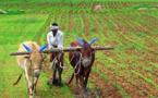 En Inde, berceau de la révolution verte, la BAD exposera sa vision de la transformation agricole en Afrique
