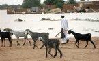 Soudan : 750 morts dans des combats tribaux pour du bétail au Sud-Soudan