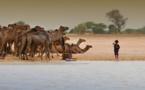 Le Tchad va étendre la zone de protection au parc de Zakouma