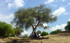 Tchad : Des dizaines d'hectares d'arbres détruits par des officiers de l'armée