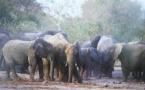 Tchad : Le Parc National de Zakouma met en vigueur une nouvelle réglementation