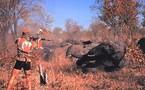 Tchad : Le massacre des éléphants continu, les autorités impuissantes