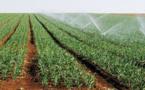 L'agriculture peut stimuler la croissance économique, révèle un rapport de l'African Centre for Economic Transformation