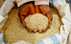 African Development Bank supports agricultural value chain development to improve household incomes and food security in the Sudan