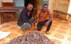 Cameroun : des trafiquants fauniques arrêtés à Doume