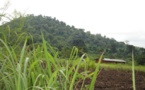 Togo : le Mécanisme incitatif de financement agricole désormais opérationnel