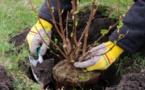 Côte d'Ivoire/Projet écologique : Un géant de l'industrie agro-alimentaire offre 500 plants d'arbres au maire de Cocody