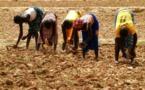 Tchad : le suivi de la campagne agricole s'intensifie