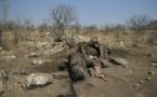 Afrique : les professionnels du tourisme inquiets du braconnage