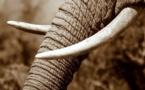 Lutter contre le trafic d'espèces, c'est aussi combattre la corruption