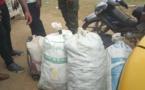 Yaoundé: Un policier et trois suspects arrêtés pour trafic d'espèces fauniques