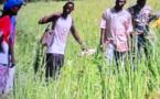 L'AFDS, un tremplin pour l'autosuffisance alimentaire au Tchad