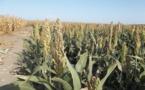 """Déficit alimentaire : une production agricole """"appréciable"""", selon Idriss Déby"""