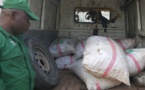 Cameroun: Six trafiquants fauniques devant la barre à Douala