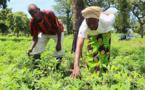 Tchad : le gouvernement veut améliorer la vie des producteurs ruraux