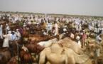 Tchad : les éleveurs formés afin de renforcer la filière bétail-viande