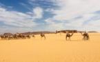 Tchad : « Les médias sont des acteurs majeurs dans le processus de développement de l'élevage »