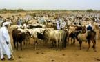 Des éleveurs de bétail, au Tchad AFP PHOTO DESIREY MINKOH.