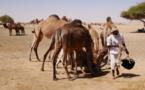 Tchad : le développement d'un pastoralisme résilient pour renforcer la paix