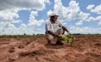 Action climatique en Afrique : la Banque mondiale annonce 22,5 Mds $ de financements