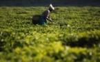 L'accès rapide aux engrais à un coût abordable, clé d'un développement agricole durable en Afrique