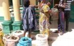 Cameroun/Tonga : Quatre trafiquants d'écailles de pangolin arrêtés