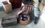 Cameroun/Kribi : un trafiquant faunique ghanéen appréhendé