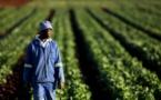 Afrique : le numérique pour améliorer la transparence et accroître la productivité agricole