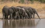 Togo : le Parc national de Fazao-Malfakassa, sera bientôt érigé en réserve de Biosphère
