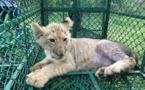 Trafic d'espèces sauvages : des milliers d'animaux saisis, 582 personnes interpellées