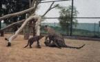 La Commission royale saoudienne d'Al-ʿUla annonce la naissance de deux bébés léopards d'Arabie