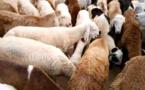 Tchad : le prix du mouton en hausse à l'approche de la fête de Tabaski