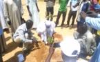 Environnement : le Tchad célèbre la semaine nationale de l'arbre