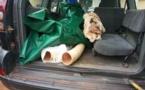 Cameroun/Trafic d'ivoire : le fils d'un ancien ministre des Finances arrêté