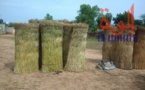 Tchad : au Sila, le commerce permet aux jeunes de se prendre en charge